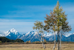 Autumn in Grand Teton Royalty Free Stock Photography