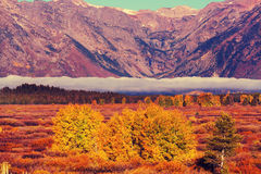 Autumn in Grand Teton Royalty Free Stock Images