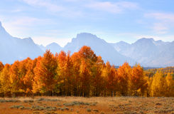 Autumn in Grand Tetons Stock Images