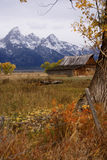 Autumn, Grand Tetons Stock Images