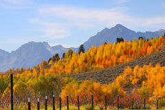 Autumn in Grand Tetons Royalty Free Stock Images