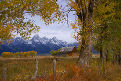 Autumn, Grand Tetons framed Royalty Free Stock Photography