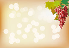 Autumn grape is very tasty . postcard . Stock Photo