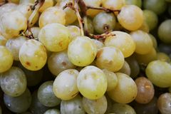 Autumn grapes background Royalty Free Stock Image