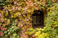 Overgrowth. Autumn Stock Image