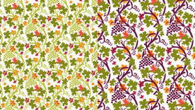Autumn grapevine Stock Photos