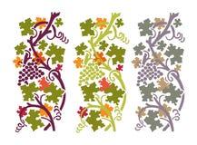 Autumn grapevine Royalty Free Stock Image