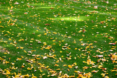 Autumn grass. Colorfull leafs on the autumn grass in the park royalty free stock image