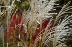 Autumn Grass Stock Photography