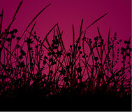 Autumn Grass Royalty Free Stock Photos