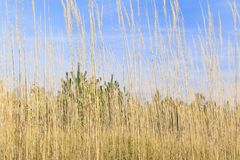 Autumn grass Royalty Free Stock Images