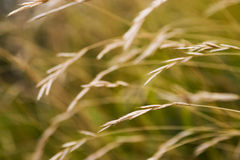 Autumn grass Stock Image