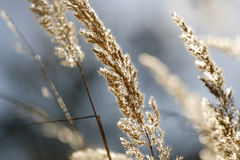 Autumn grass. A close-up of shiny autumn grass royalty free stock photo