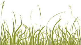 Autumn grass. Background with autumn grass,  design element Royalty Free Stock Photo