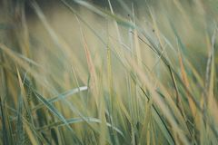 Autumn grass abstract background Stock Photography