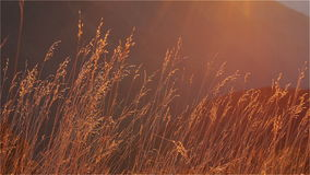 Autumn Grass in the Afternoon Sun stock video footage