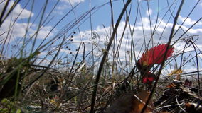 Autumn grass against the sky stock video footage