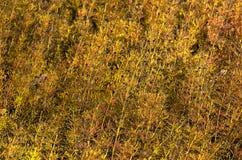 Autumn grass background pattern Royalty Free Stock Photos