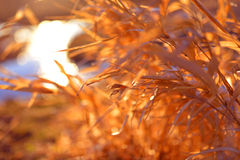 Autumn Grass. Bright autumn grass near to river Stock Image