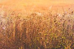 Autumn Grass In Bright Sunlight Sunny Yellow Dry Grass Background Fotografia de Stock