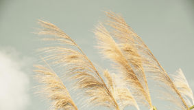 Autumn grass. Close up of autumn grass at day light royalty free stock photography