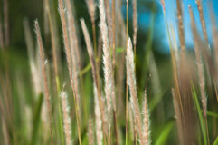 Autumn grass Stock Images