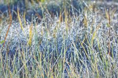 Unsaturated color and tone of grass covered with hoarfrost as background stock photo