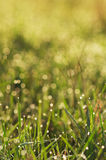 Autumn grass with dew Stock Image