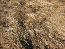 Autumn grass Royalty Free Stock Image