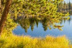 Autumn Grass Beside een Meer Royalty-vrije Stock Foto