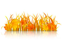 Autumn grass. Stock Photo