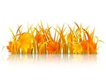 Autumn grass. Autumn grass and fallen maple leaves Stock Photo
