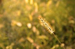 Autumn Grass Field Stock Photo