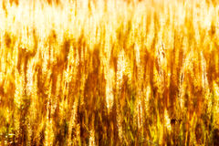 Autumn grass in a field Stock Photo