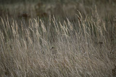 Autumn grass in field Stock Photography