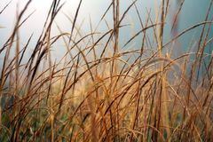 Autumn Grass Field. Blue Sky. Morning Misty Meadow. Orange Grass. Close up. Moody Layout royalty free stock image