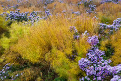 Autumn Grass and Flower Background Stock Image