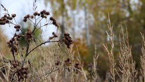 Autumn grass with hawthorn and background blur stock footage