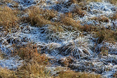 Autumn grass in hoarfrost Royalty Free Stock Photography