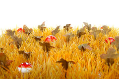 Autumn grass with little mushrooms Stock Image