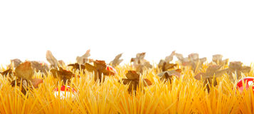 Autumn grass with little mushrooms Stock Photos