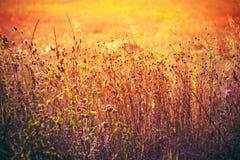 Autumn Grass On Meadow seco amarelo Imagem de Stock
