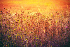 Autumn Grass On Meadow seco amarillo Imagen de archivo