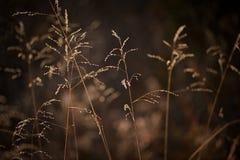 Autumn Grass soleggiato delicato Immagine Stock