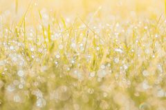 Autumn grass in sunset sunlight. Green yellow orange abstract nature blurred background. Macro, bokeh. Autumn grass in sunset sunlight. Green yellow orange royalty free stock photo