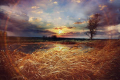 Autumn grass in swampy field Stock Images