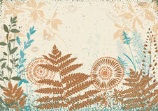 Autumn grass Stock Image