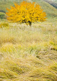 Autumn grass and wild apricot in the field Royalty Free Stock Photo