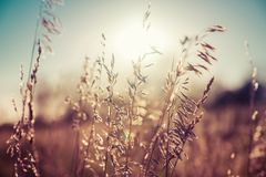Autumn grass and wildflower background with sunlight. Blurred bokeh background royalty free stock image