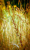 Autumn Grasses Stock Photo